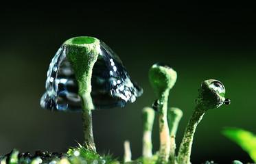 small mushrooms macro moss