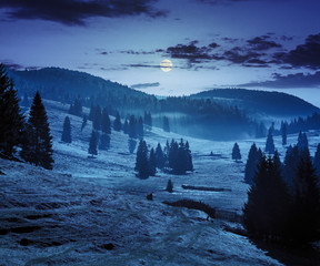cold fog in conifer forest in  mountains of Romania at night in full moon light