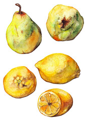 Watercolor lemon citrus pear fruit set isolated