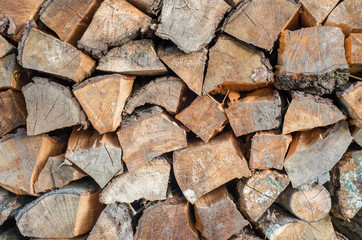 Pile of beech wood chips