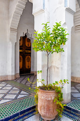 Potted plant in tiled courtyard. Marrakech, Morocco