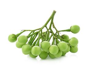 Solanum torvum on white background