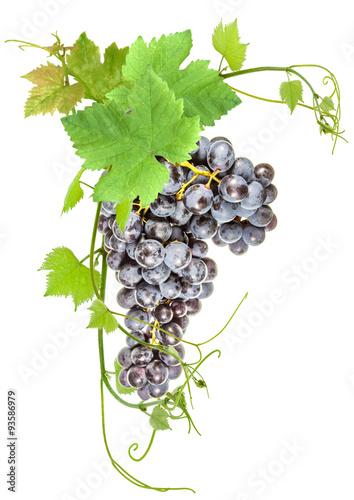 grappe de raisin muscat et feuilles de vigne fond blanc photo libre de droits sur la banque d. Black Bedroom Furniture Sets. Home Design Ideas