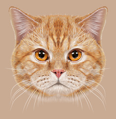 Illustration of Portrait British short hair Cat. Cute orange Domestic cat with copper eyes.