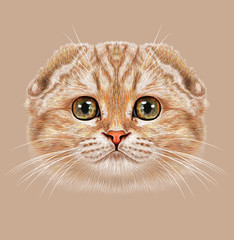 Illustration Portrait of Scottish Fold Cat. The cute tabby peach cat with green eyes.