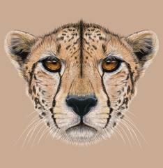 Cheetah animal cute face. Illustrated African wild fast cat head portrait. Realistic fur portrait of cheetah isolated on beige background.