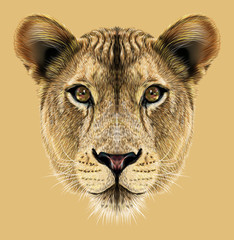Portrait of Lioness. African big cat.