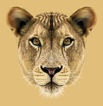 Lioness animal cute face. Illustrated African wild lion cat head portrait. Realistic fur portrait of lioness isolated on beige background.