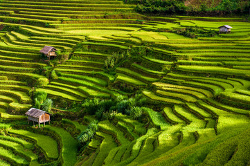 Papiers peints Les champs de riz Scenic view of terraced rice fields