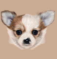 Illustrative Portrait of Chihuahua Puppy. Cute long hair bi-colour Puppy.