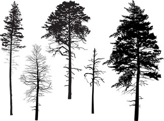 five swamp pine silhouettes isolated on white