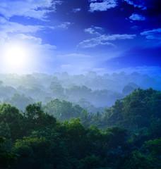 sunrise in the jungles