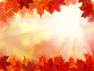 Fall Background with Autumn Maple Leaves