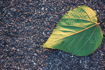 Single leaf on road / nature concept.