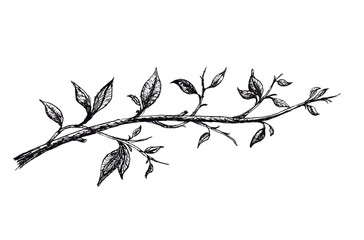 Ink hand drawn branch with leaves