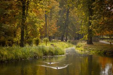 estanque del parque de otoño