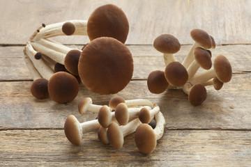 Fresh pioppino mushrooms