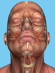 Anatomy of face and neck muscles featuring platysma muscle, sternohyoid muscle, sternocleidomastoid, digastric msucle, mentalis msucle, depressor labii inferioris muscle and orbicularis oculi muscle.