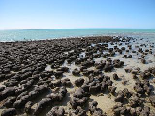 Stromatolites, Shark Bay, Western Australia