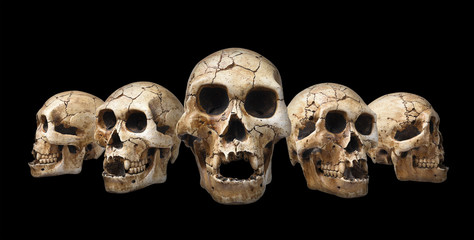 Collection of human skull isolated on black background