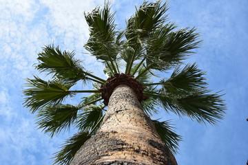 Palme Himmel Blau Urlaub