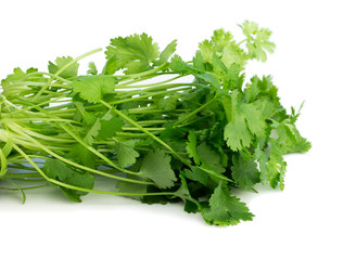 Fresh coriander, also known as cilantro isolated on white