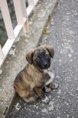 Homeless puppy