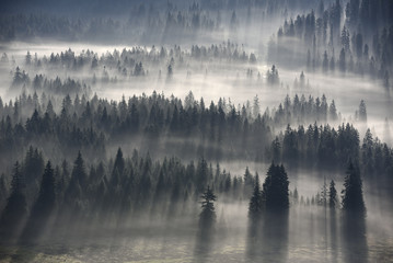 Wall Murals Forest foggy river