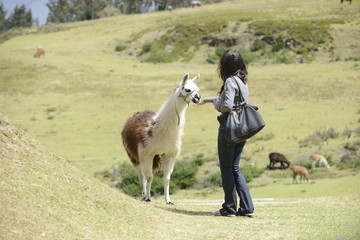 A woman is approaching a llama.