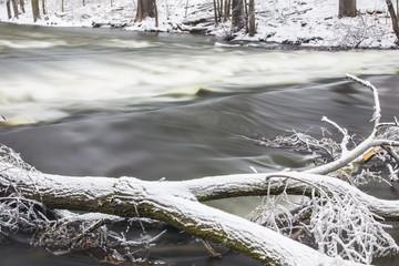 Frozen River with Tree