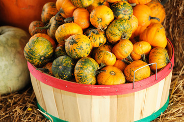 pumpkins in container
