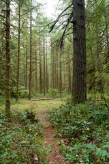 Forest Trail Wooded Area Oxbow Regional Park Oregon
