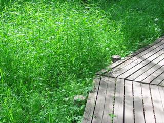 木道と夏草