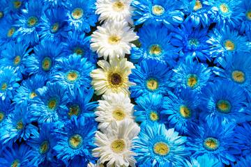 Fototapete - Blue and white flowers decoration, Madeira Flower Festival, Portugal.