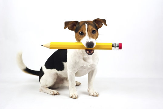 dog with big pen