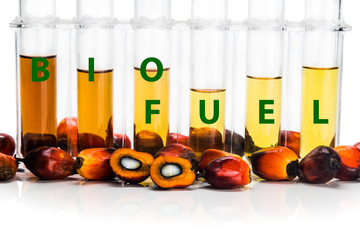 Oil palm derived biodiesel in test tubes and BIOFUEL word
