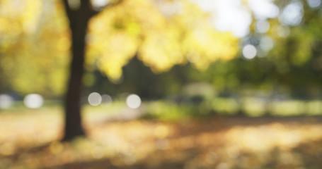 blurred background of autumn park