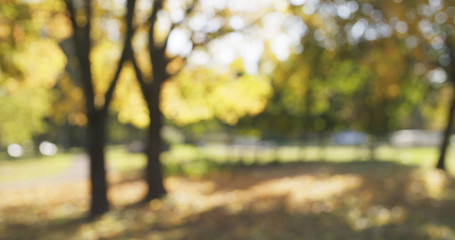 blurred background of autumn park