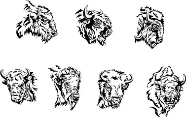 buffalo, illustration, portrait, various postures of the animal, buffalo head