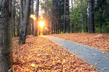 Beautiful evening scene in autumn park with sun rays