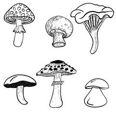 Black and white Mushrooms.