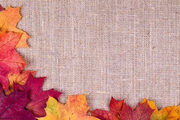 Background from autumn leaves of a maple on burlap
