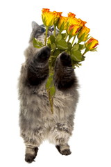 funny fluffy cat with flowers