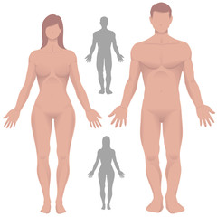 Male and Female Anatomy in Vector