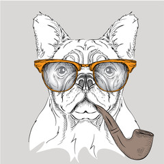 Image Portrait bulldog in the glasses with  tobacco pipe. Vector illustration.