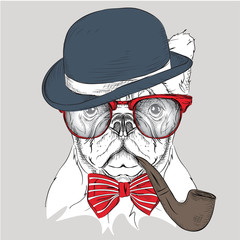Image Portrait bulldog in the hat, cravat and glasses with  tobacco pipe. Vector illustration.