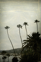 aged and worn vintage photo of palm trees with beach city in background