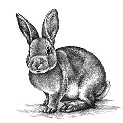 engrave rabbit illustration