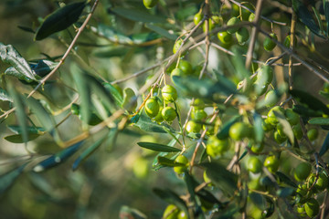 Green olives on olive oil on a rainy day