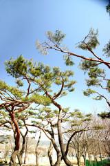 자연과 산림